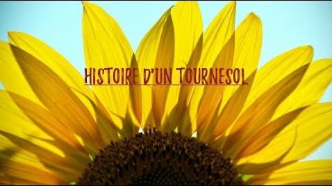 HIstoire de Tournesol